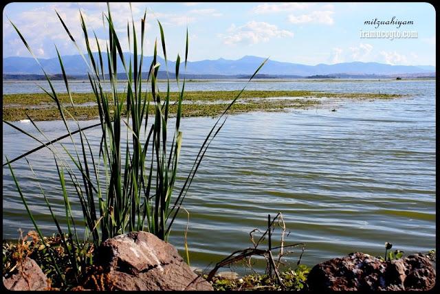 Iramuco guanajuato lago de Cuitzeo