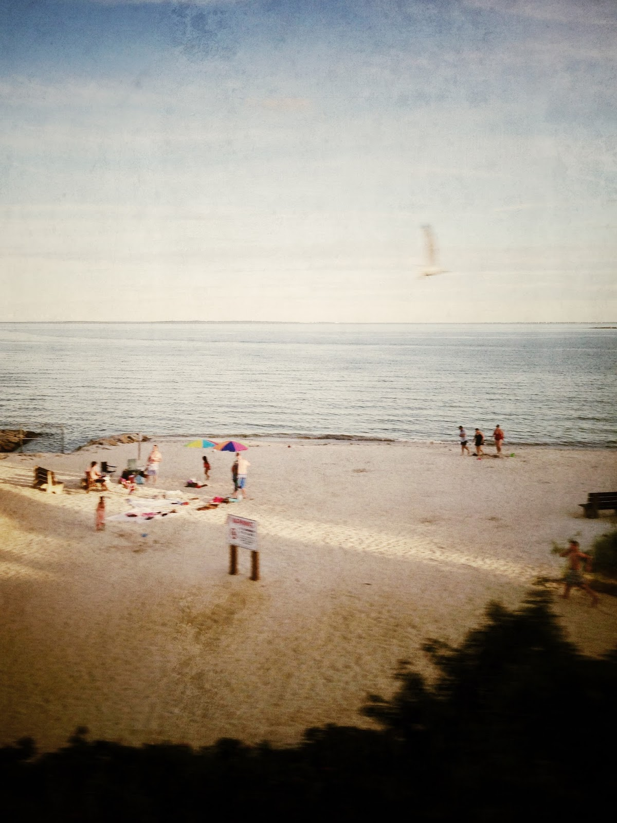 From a Moving Train in CT - Flotsam of the Mind