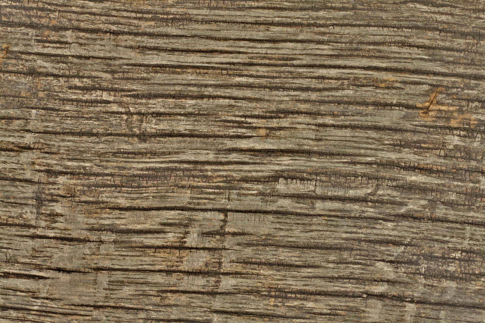 Wood dry cracked bench plank tree bark texture ver 15