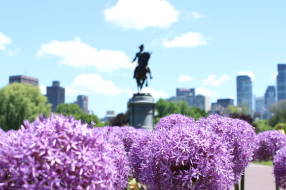 This view of Boston features fresh purple flowers and the city's skyline.