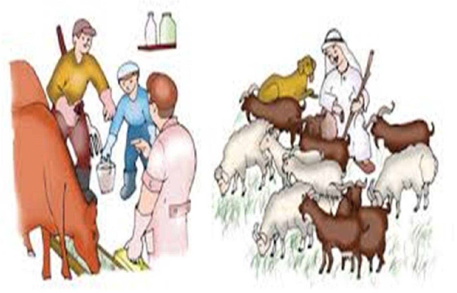 میخام توبخورم الحيوانات الاليفه و الحيوانات البرية