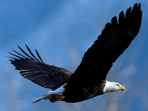 De Aguilas Volando