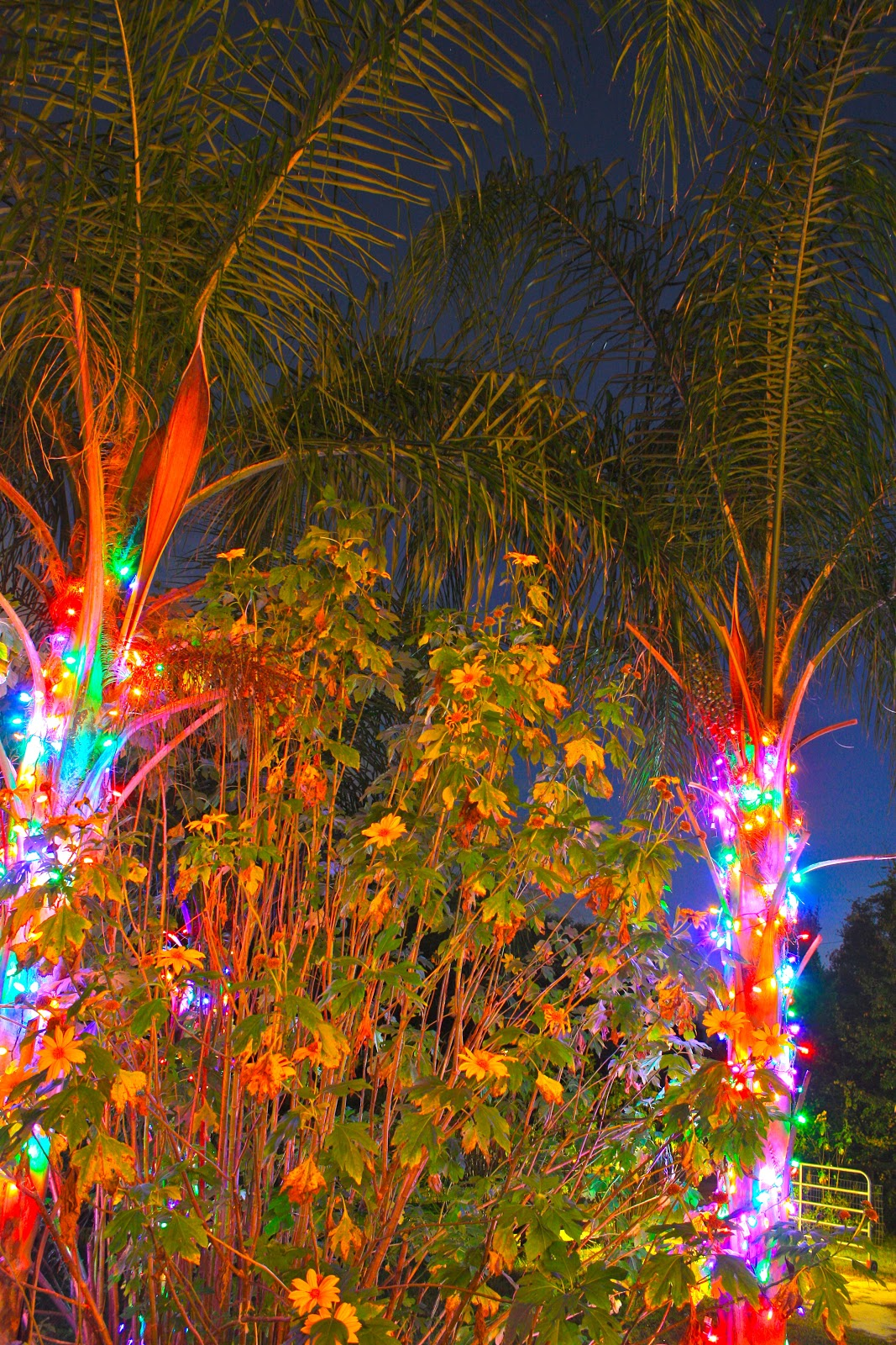 Palm Tree Christmas Lights With