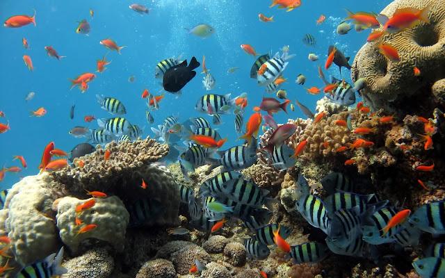 Imagenes de muchos Peces en Arrecifes de Coral