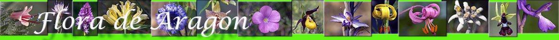 flora-aragon-publicaciones