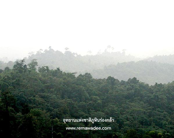 ภูหินร่องกล้า จ.พิษณุโลก