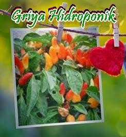 Griya Hidroponik