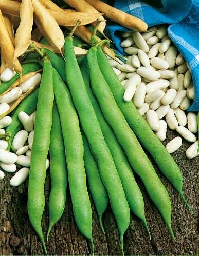Le jardin de pestoune semer des haricots - Variete de haricot vert ...