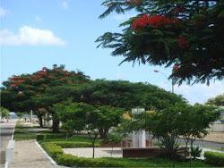PAU BRASIL