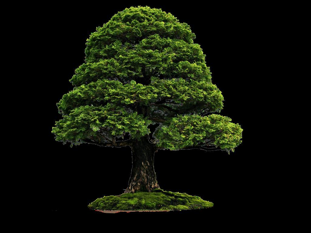 File Png untuk Pohon ~ @rie fabian