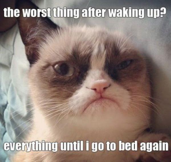 http://xaxor.com/funny-pics/funny-grumpy-cat-meme-part-2.html