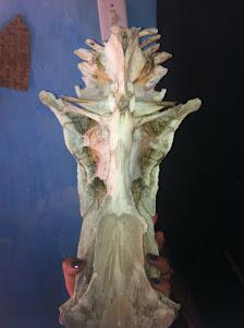 Fóssil do Quilombo Cajueiro