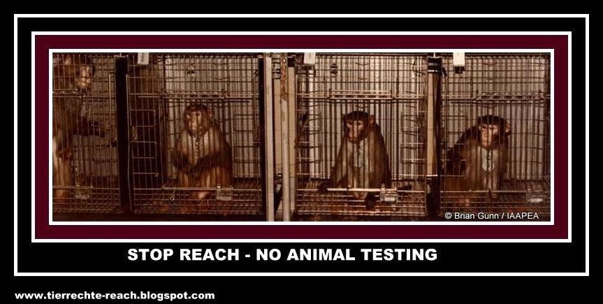 Tierrechte-Chemikalienversuche an Tieren