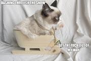 meme grumpy cat meme