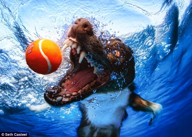 DOGS SWIMMING UNDERWATER
