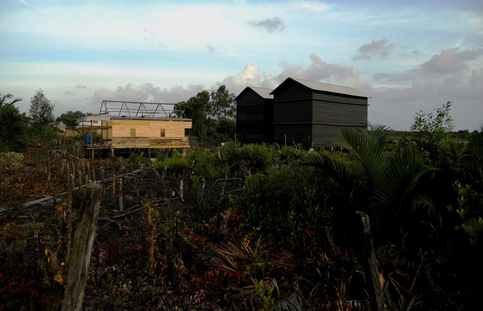 1600 x 1030 · 188 kB · jpeg, Desa Kuala Dua Belas, Kecamatan Tulung ...