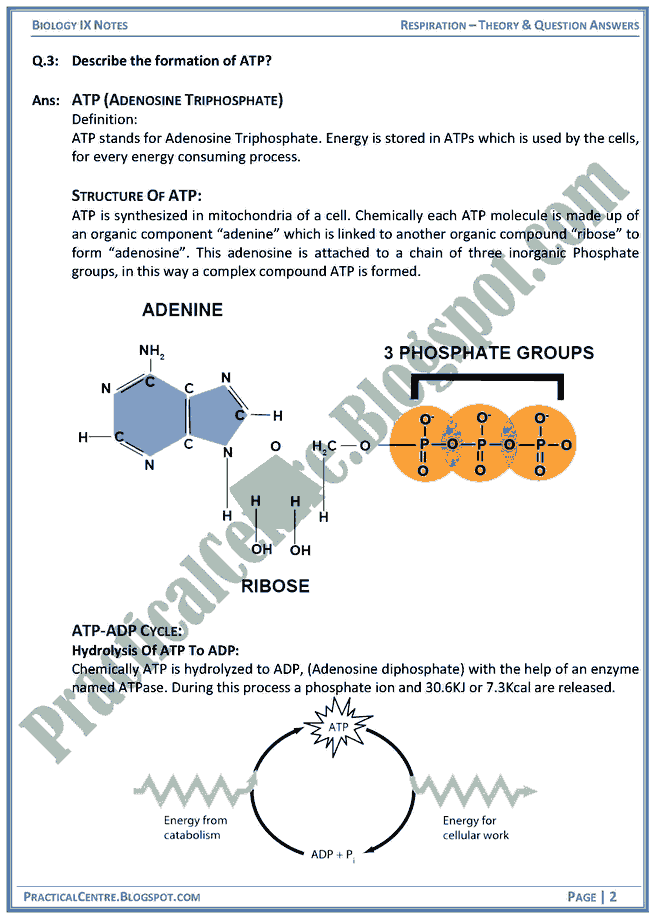 respiration-theory-and-question-answers-biology-ix