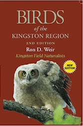 Birds of the Kingston Region