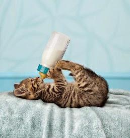 Suscedâneos do leite