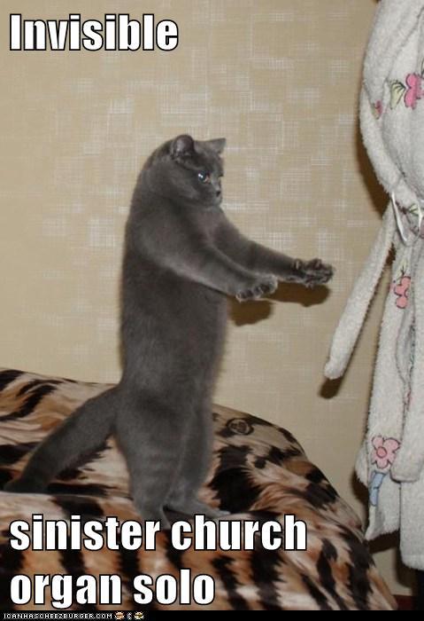 Ekspresi Ekspresi Lucu Foto Kucing Di Internet Kucing Gue