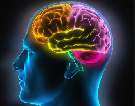 10 Fakta Menarik Tentang Otak Manusia