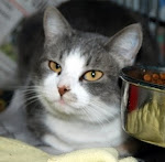 5/14 BELLA STILL NEEDS YOU4/19/11 Bellaluna still needs rescue, adopter or local  foster. Read More