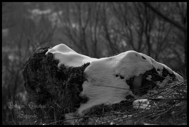 Winterwald - Impressionen im Winter Landschaftsfotografie