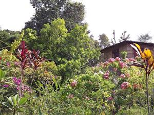 Casa na Vila Curicaca