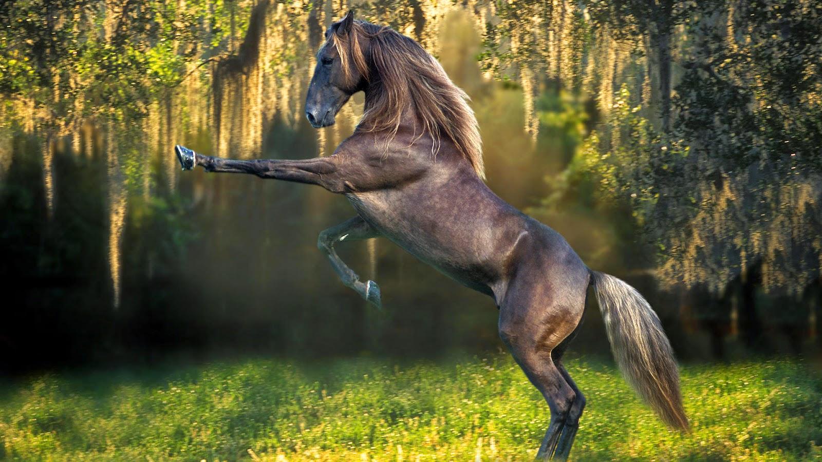Wonderful   Wallpaper Horse Samsung Galaxy - Horse%2BHD%2BWallpapers%2B(12)  Perfect Image Reference_69532.jpg