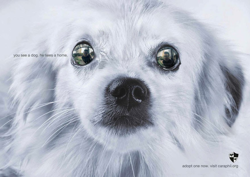 You See A Dog. He Sees A Home - 33 Powerful Animal Ad Campaigns That Tell The Uncomfortable Truth