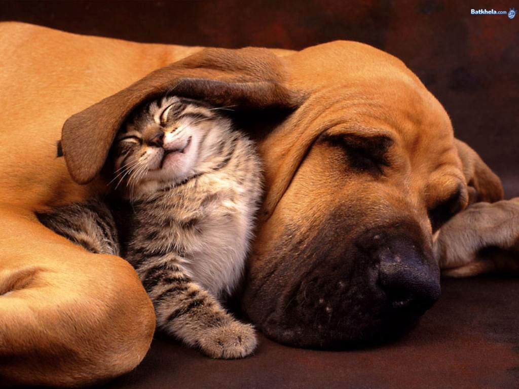 Cute Cat Dog Sleep Together Wallpaper