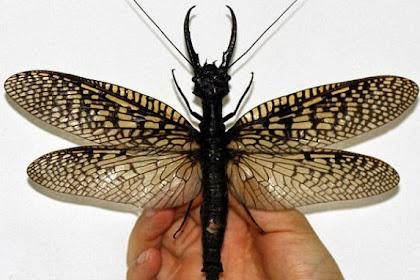 Serangga Misterius Ditemukan di Pegunungan Tiongkok