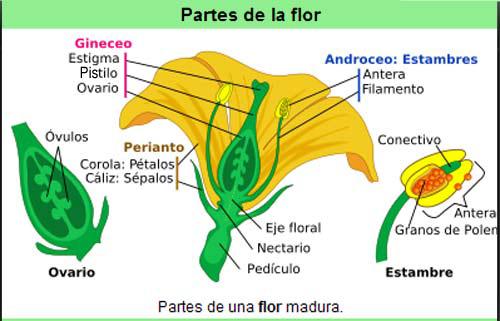 la parte de la planta: