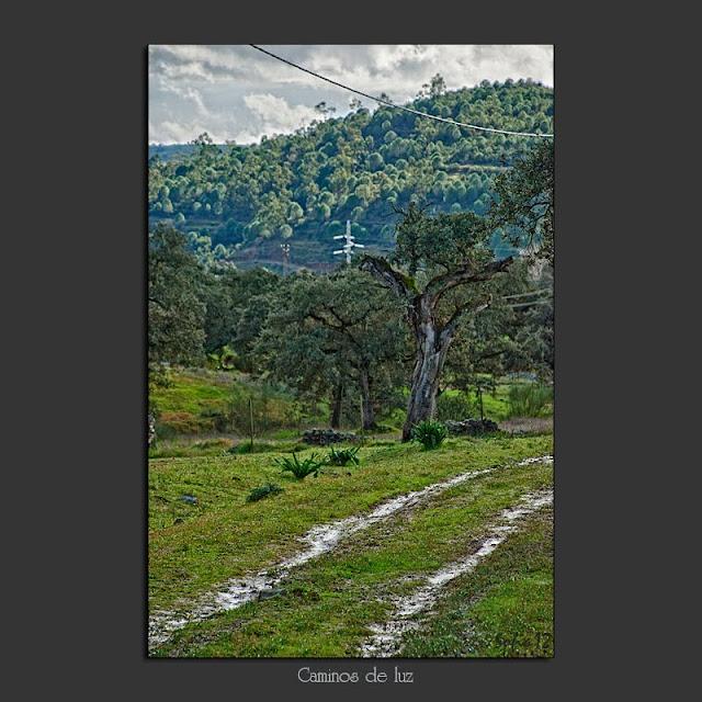 Camino y cables de tendido eléctrico en el campo tras la lluvia