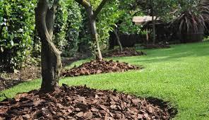 Venta de corteza de pino para decoración de jardines
