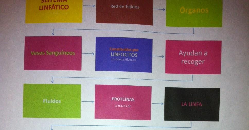 Mapa conceptual Sistema Linfático -> Linfedema | Sistema Linfatico ...
