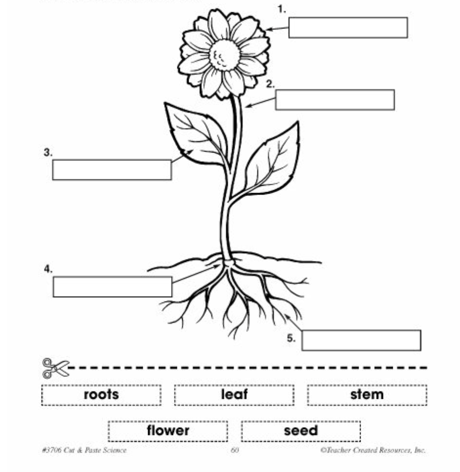 1º ESO NATURAL SCIENCES: PLANTS I: plant and flower structure