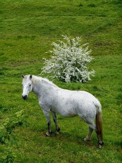 Le cheval des elfes