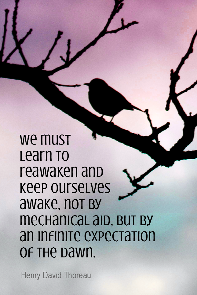 visual quote - image quotation for AWARENESS - We must learn to reawaken and keep ourselves awake, not by mechanical aid, but by an infinite expectation of the dawn. - Henry David Thoreau