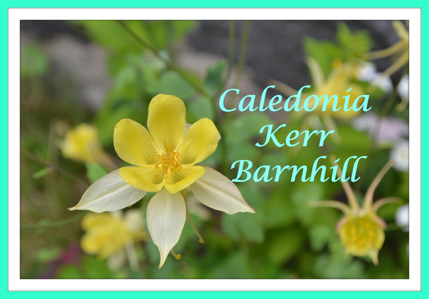 52 Ancestors 2015 Edition:  #15 Caledonia Kerr Barnhill --How Do You Spell That?