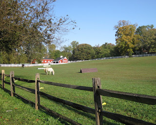 Horses grazing in a Maryland pasture.