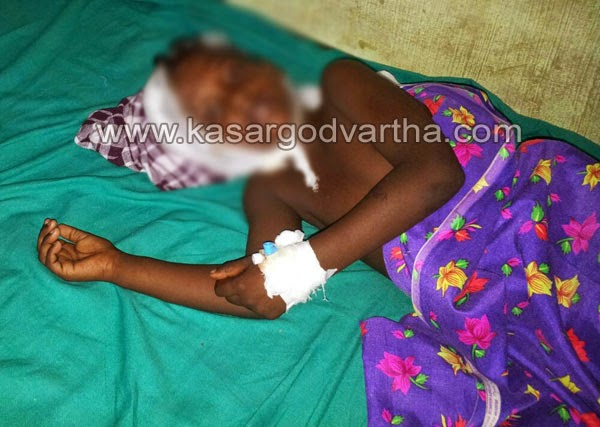 Kasaragod, Vellarikundu, Kerala, Dog bite, Injured, General-hospital,