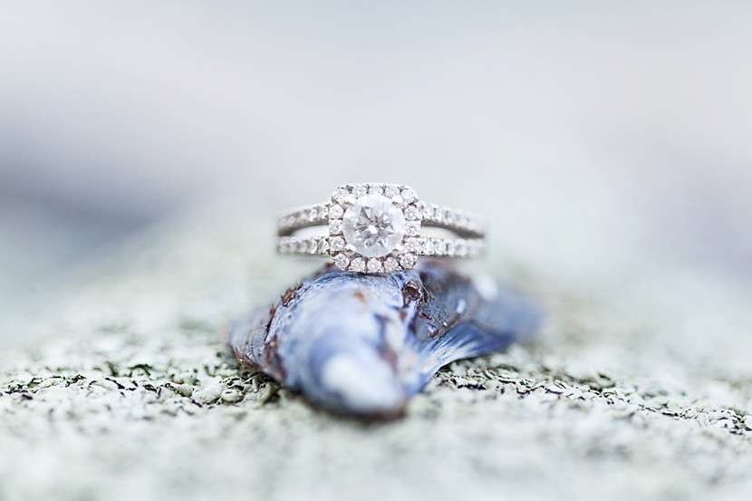 engagement ring on shell photo
