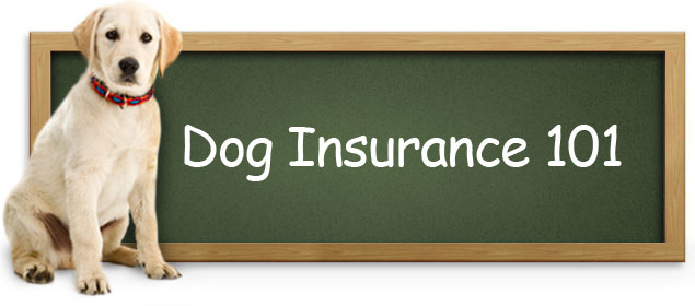 dog, Dogs, Medical Insurance For Dogs, pet, pets,