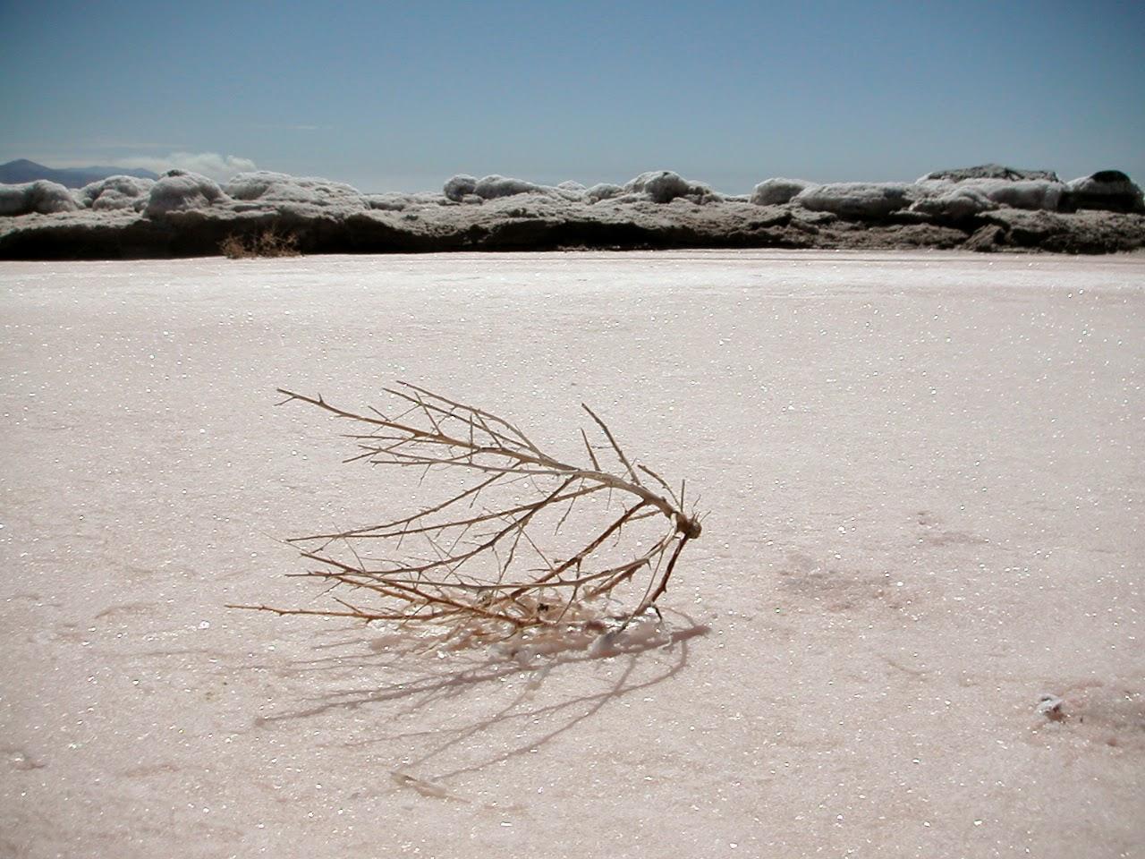 spiral jetty essay by robert smithson