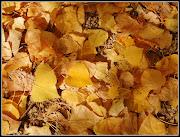 Hojas de otoño caen secas, muertas,. muertas caen como hojas de calendario . el cubillo cortes nov