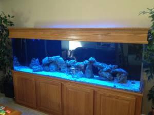 Giant aquariums 300 gallon aquarium 1500 thorndale for Craigslist fish tanks