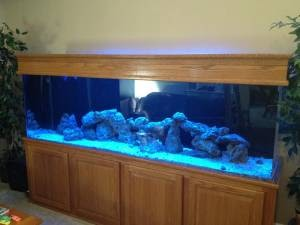 Giant aquariums 300 gallon aquarium 1500 thorndale for 300 gallon fish tank