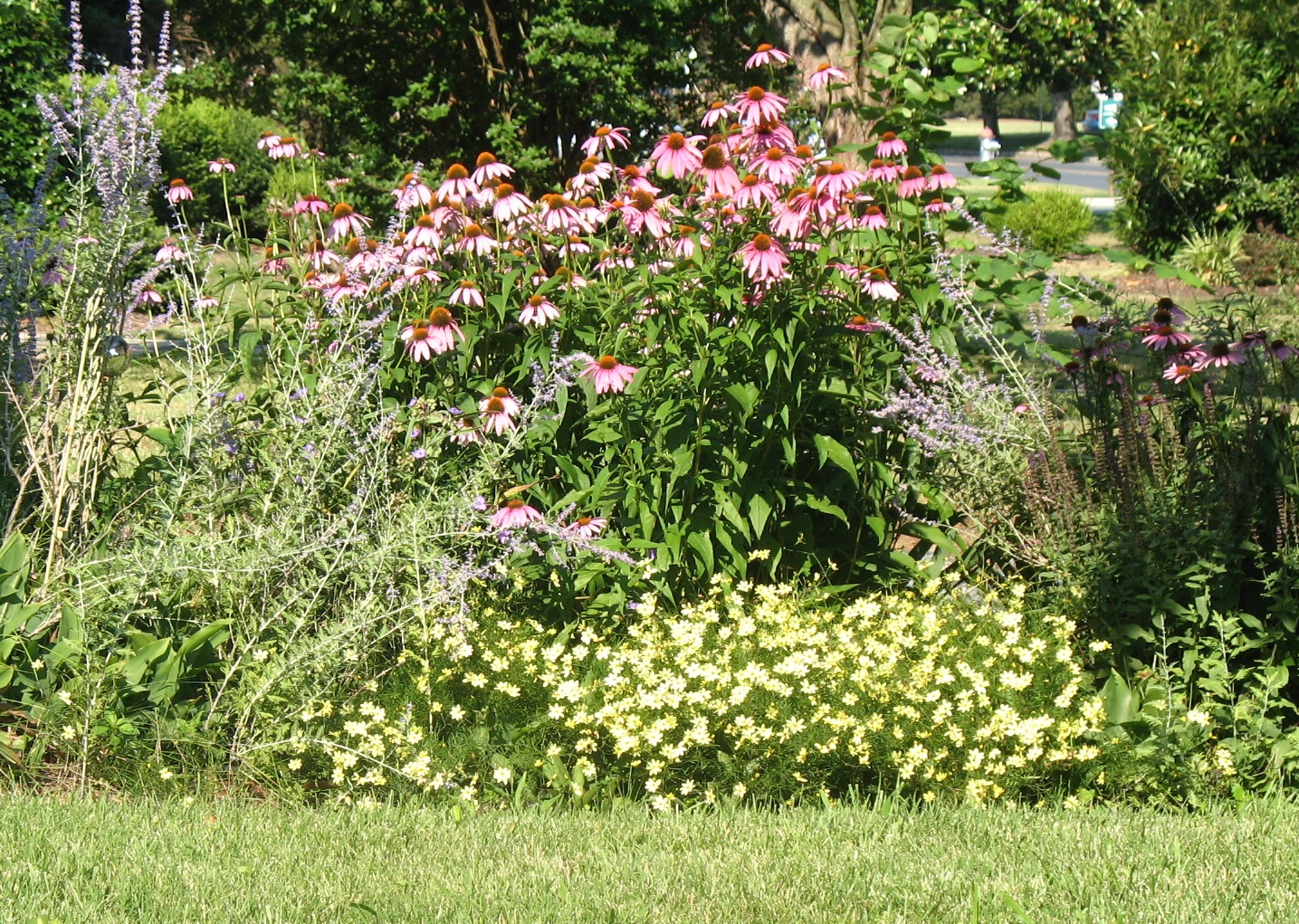 Views from the garden design a perennial flower bed for for Flower bed designs