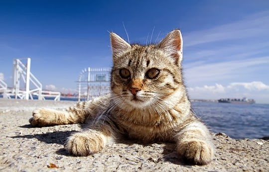 cat by the water